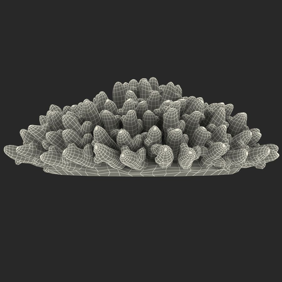 Acropora Coral royalty-free 3d model - Preview no. 12