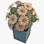Turbinicarpus Pseudopectinatus Rubriflorus Cactus 3d model