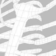 骨格肋骨システム 3d model