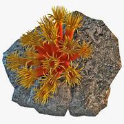 珊瑚珊瑚虫 3d model