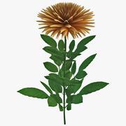 Orange Dahlia Flower 3d model
