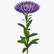 China Aster Flower 3d model