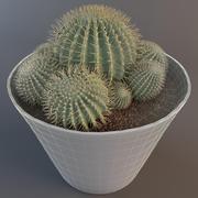 Cactus Epiphyllum Sp 2 3d model