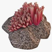 산호 버섯 Ramaria Araiospora 3d model