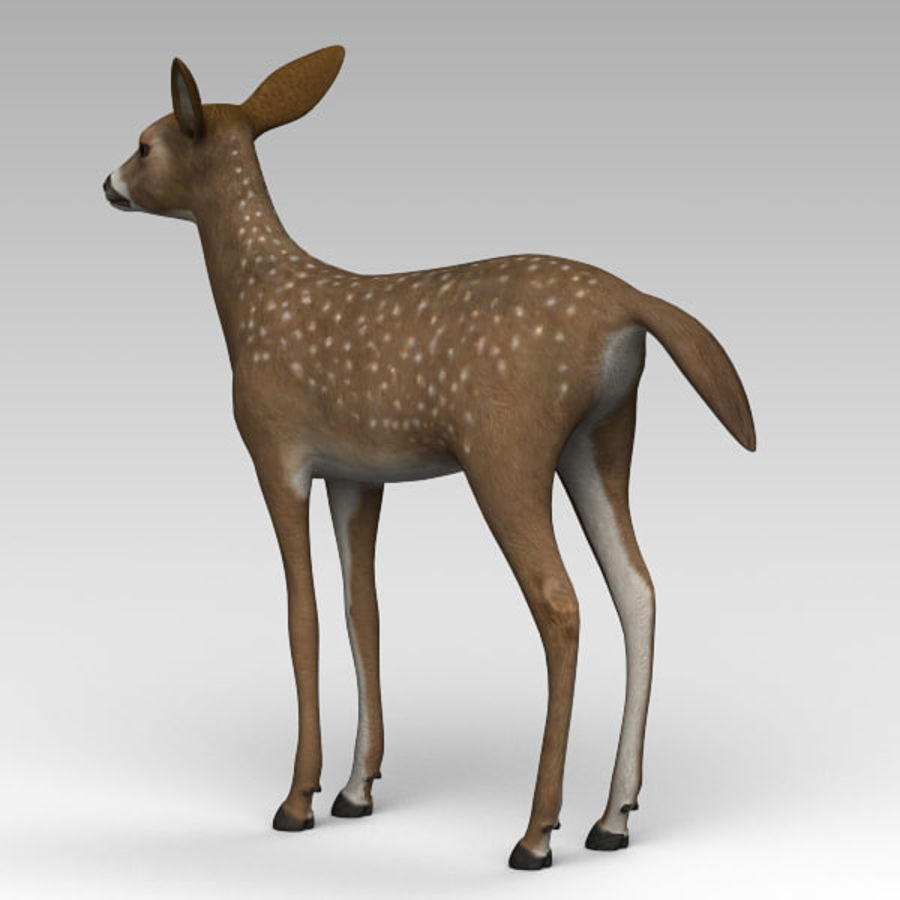 Damhirschkuh royalty-free 3d model - Preview no. 3