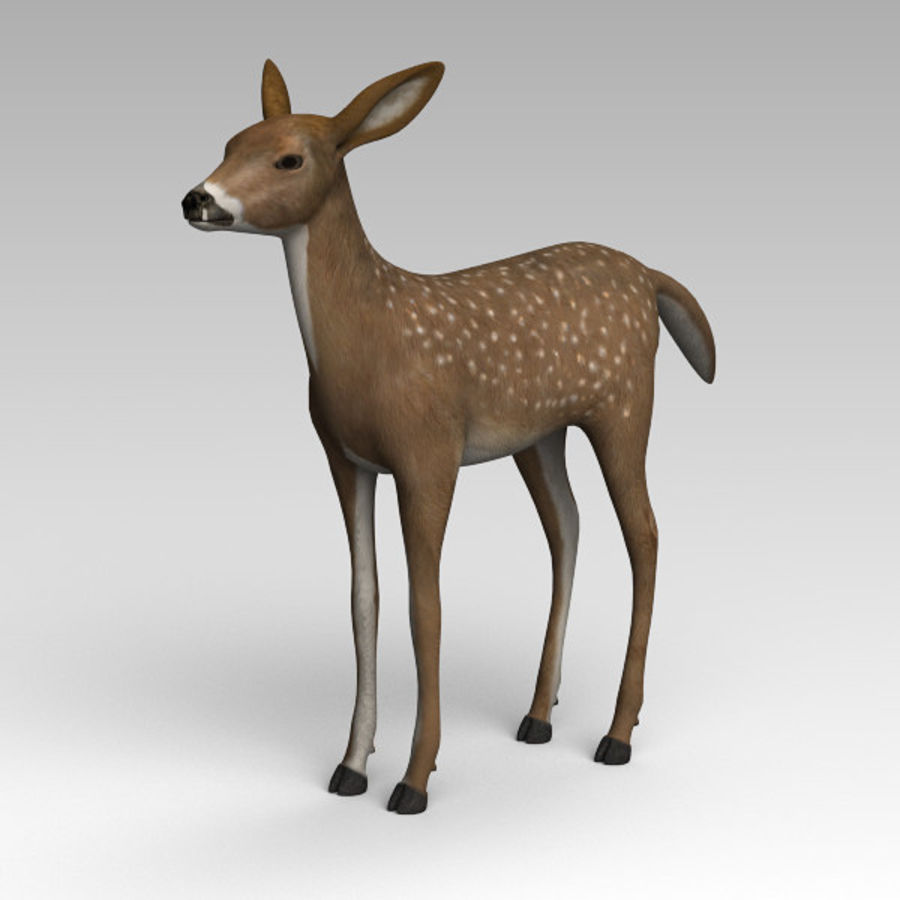 Damhirschkuh royalty-free 3d model - Preview no. 1
