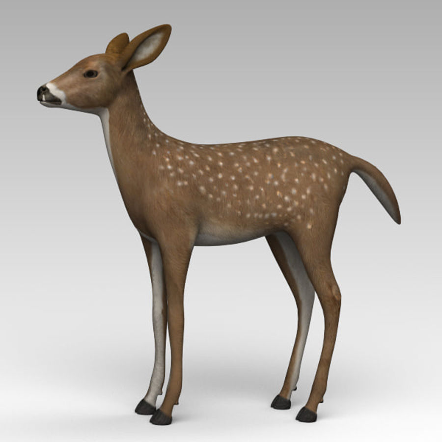 Damhirschkuh royalty-free 3d model - Preview no. 2