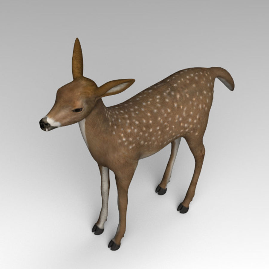 Damhirschkuh royalty-free 3d model - Preview no. 5