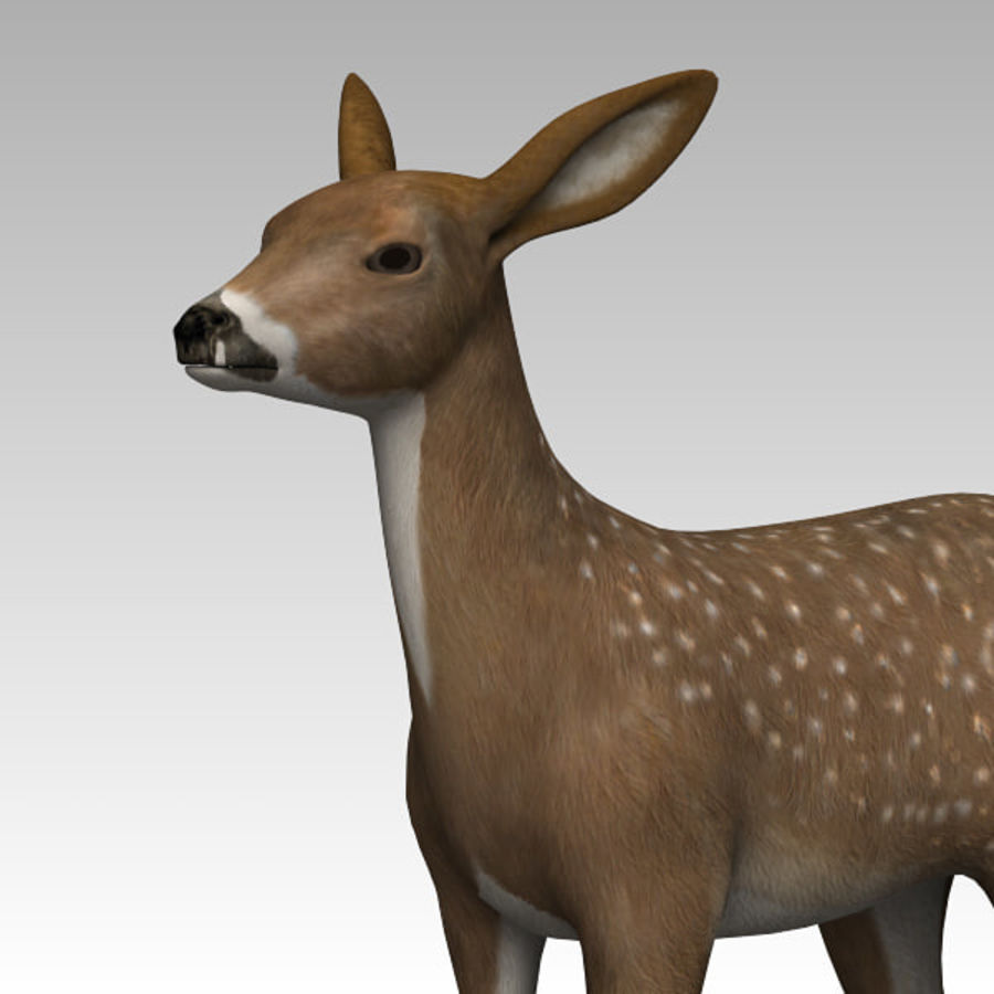 Damhirschkuh royalty-free 3d model - Preview no. 4