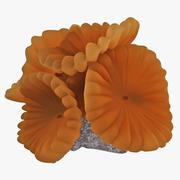 폭스 산호 3d model