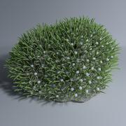 グリーンゼニアサンゴ 3d model