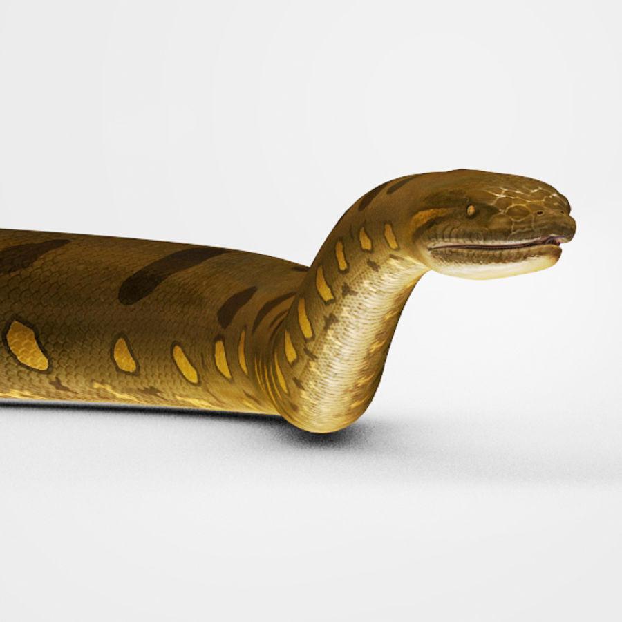 Anaconda royalty-free 3d model - Preview no. 5
