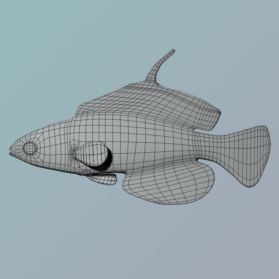 Flasher Wrasse(1) royalty-free 3d model - Preview no. 8
