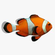 Clown fisk 3d model