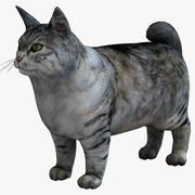 Kurilian Bobtail Cat 3d model
