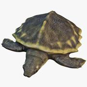 Pig Nosed Turtle 3d model