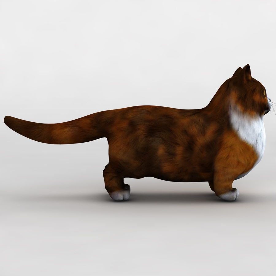 Munchkin Cat royalty-free 3d model - Preview no. 5
