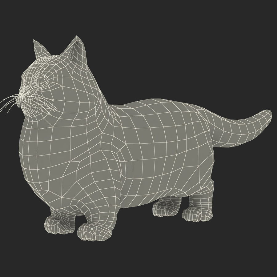 Munchkin Cat royalty-free 3d model - Preview no. 9