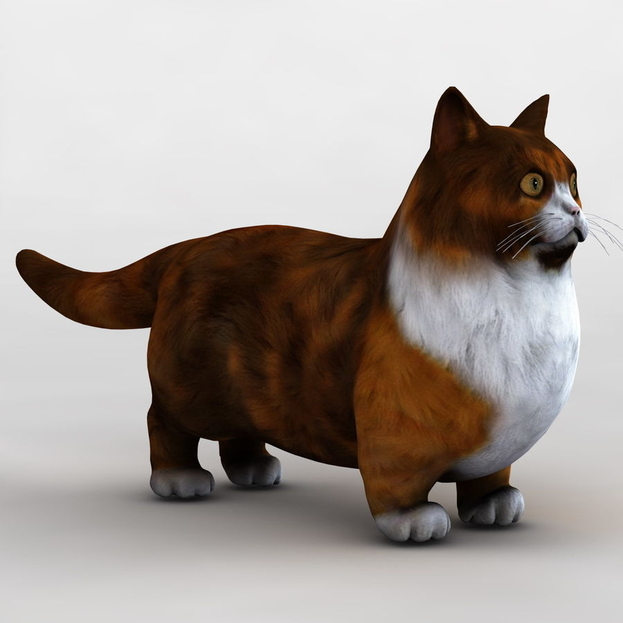 Munchkin Cat royalty-free 3d model - Preview no. 4