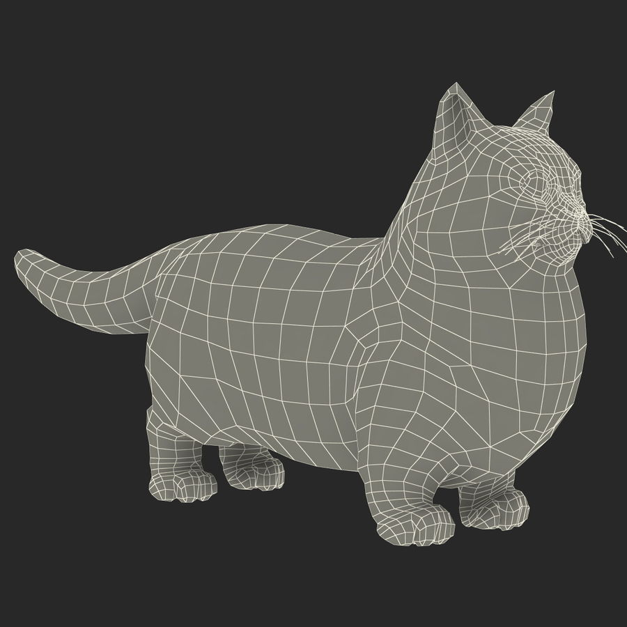 Munchkin Cat royalty-free 3d model - Preview no. 10