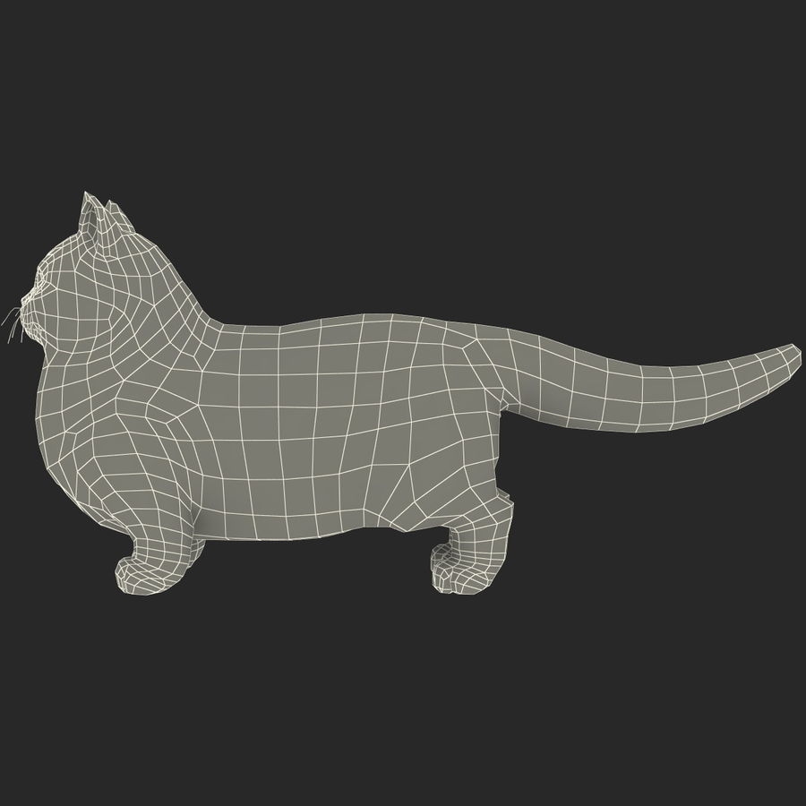 Munchkin Cat royalty-free 3d model - Preview no. 8