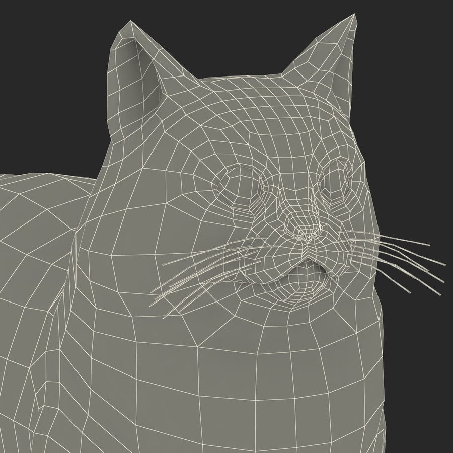 Munchkin Cat royalty-free 3d model - Preview no. 16