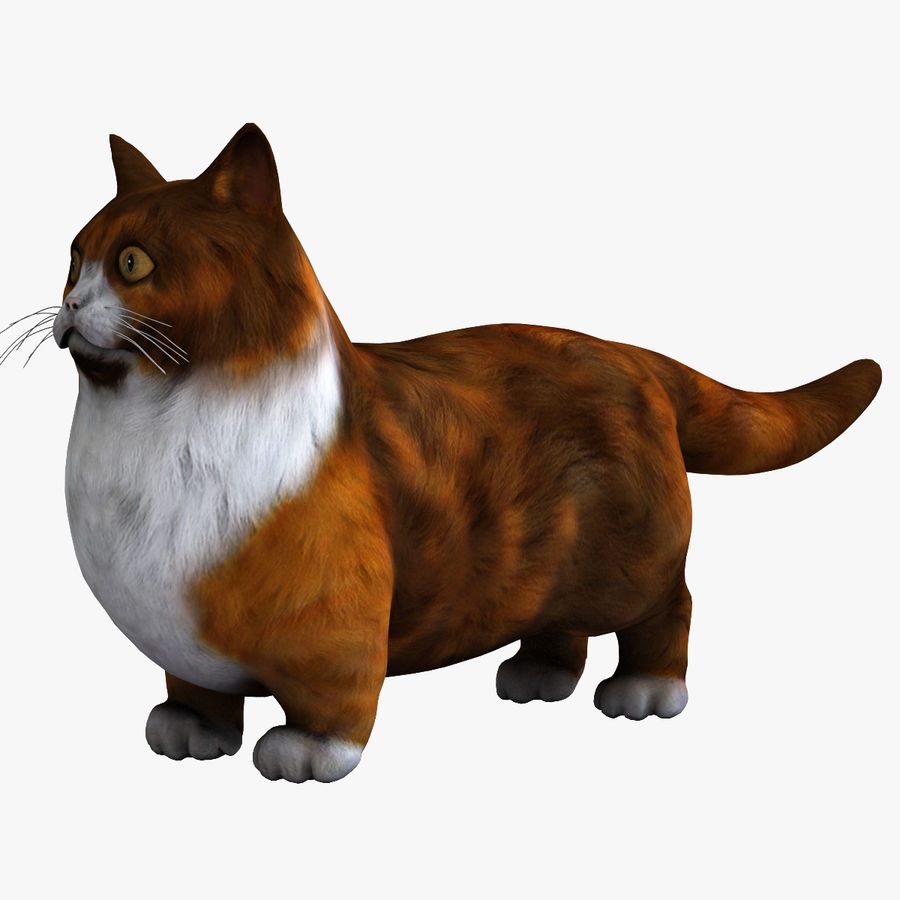 Munchkin Cat royalty-free 3d model - Preview no. 1
