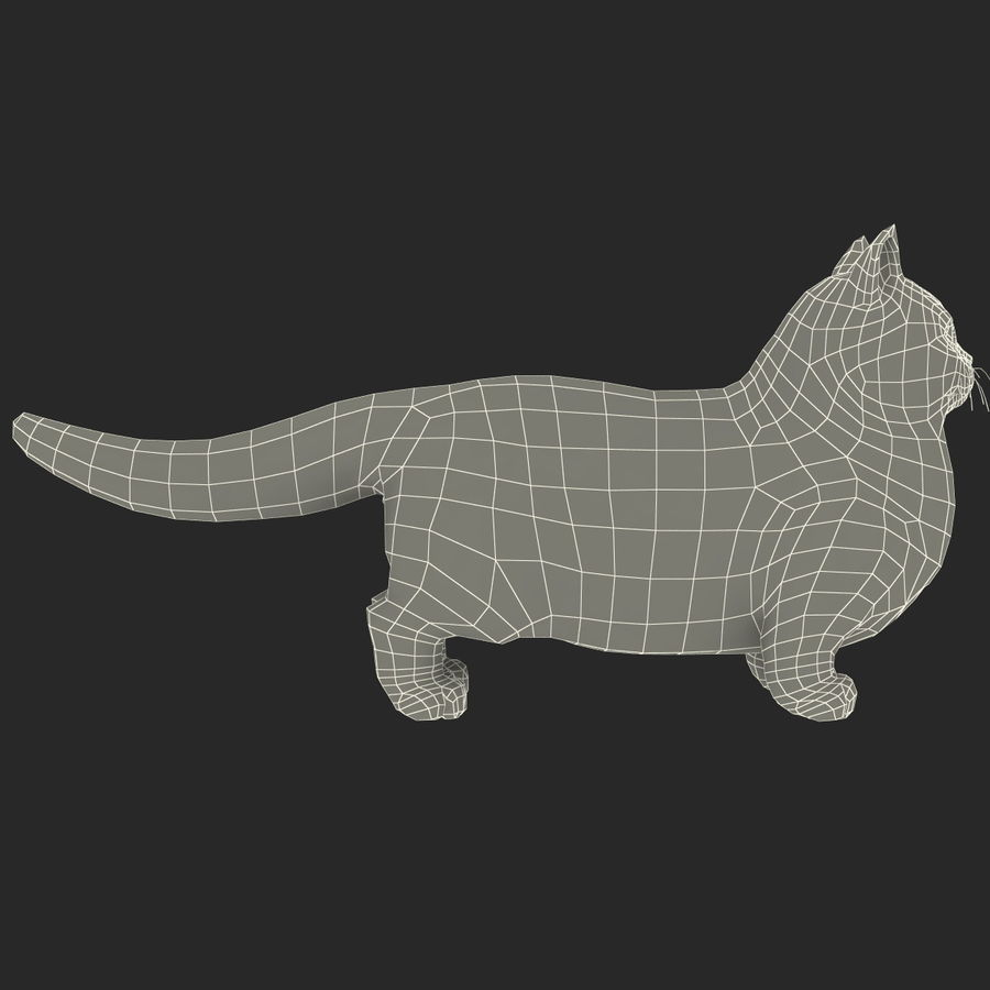Munchkin Cat royalty-free 3d model - Preview no. 11