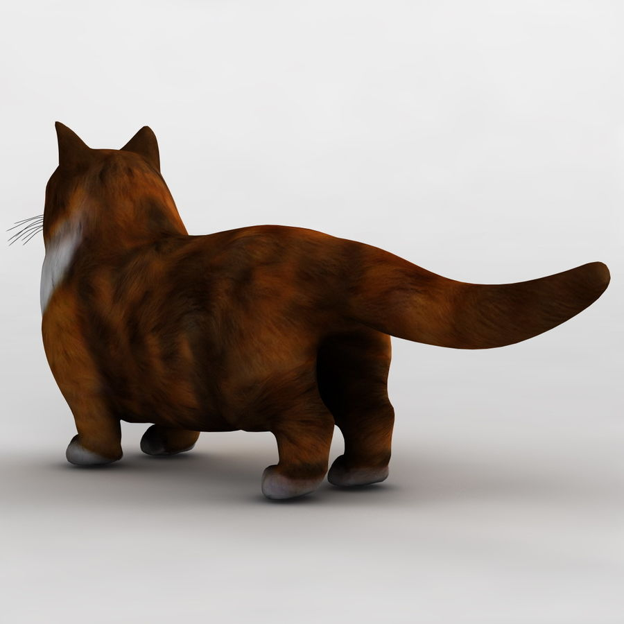 Munchkin Cat royalty-free 3d model - Preview no. 7