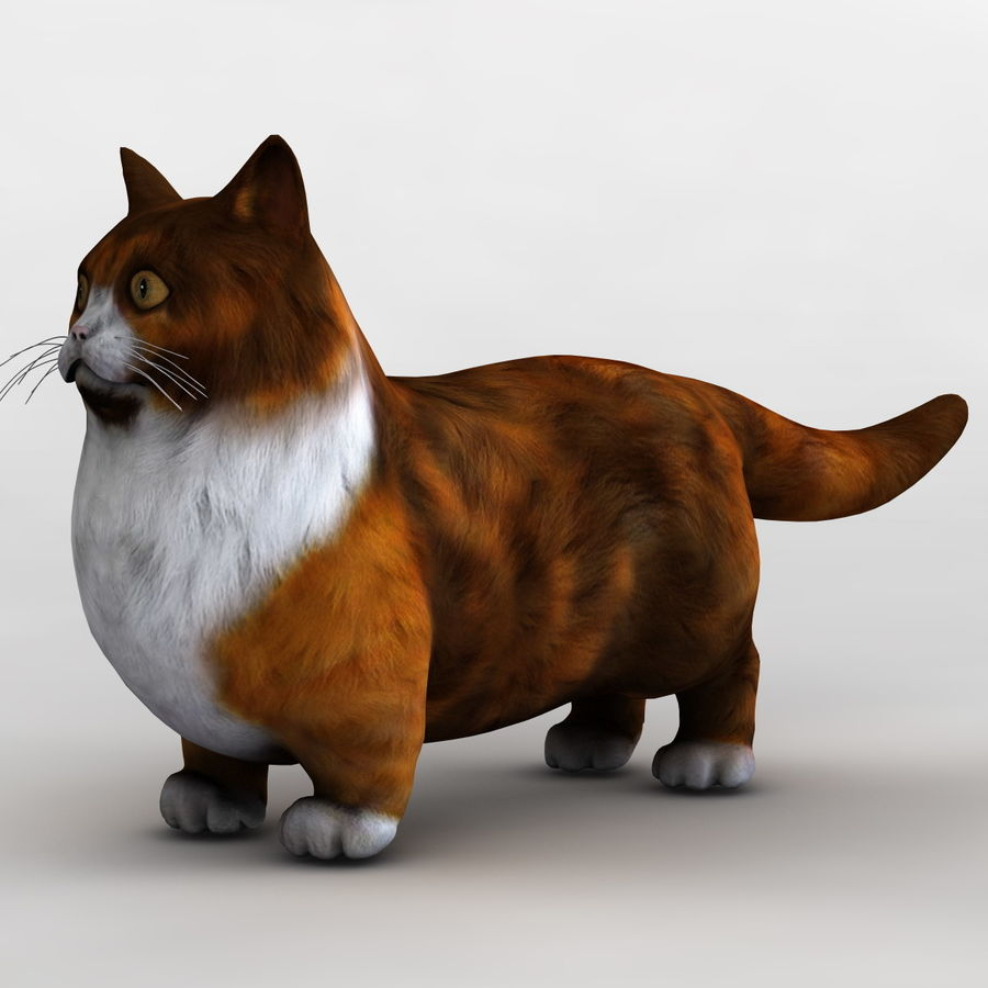 Munchkin Cat royalty-free 3d model - Preview no. 2
