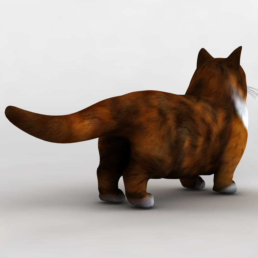 Munchkin Cat royalty-free 3d model - Preview no. 6