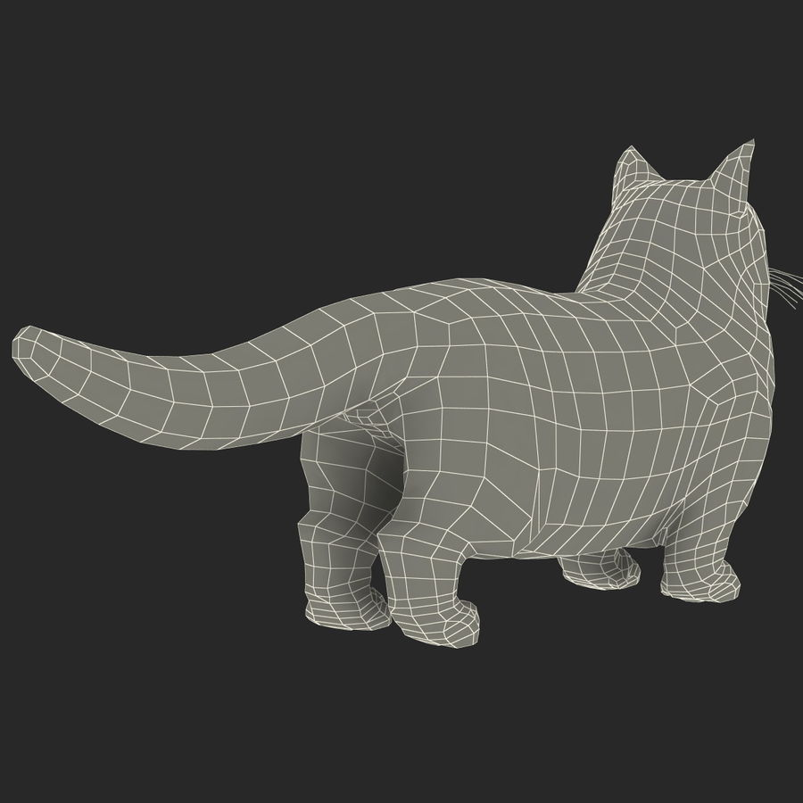 Munchkin Cat royalty-free 3d model - Preview no. 12