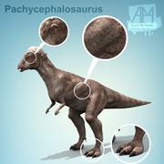 Dinosaurier Pachycephalosaurus 3d model