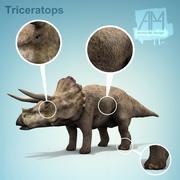 triceratops dinosaurs 3d model