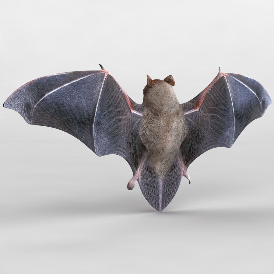 Bat royalty-free 3d model - Preview no. 1