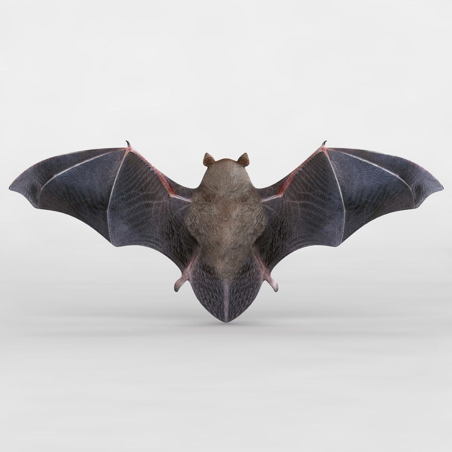 Bat royalty-free 3d model - Preview no. 7