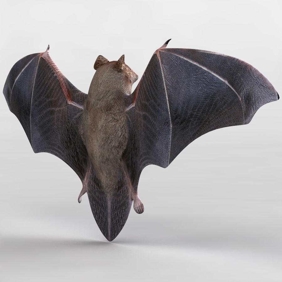 Bat royalty-free 3d model - Preview no. 6