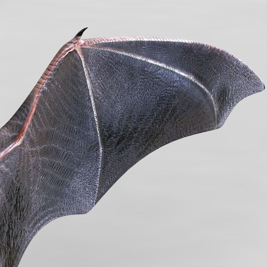 Bat royalty-free 3d model - Preview no. 9