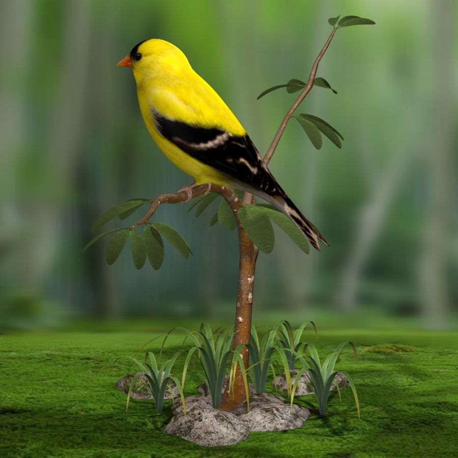 AB American Goldfinch royalty-free 3d model - Preview no. 6