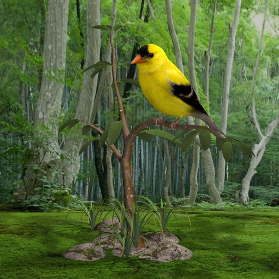 AB American Goldfinch royalty-free 3d model - Preview no. 5