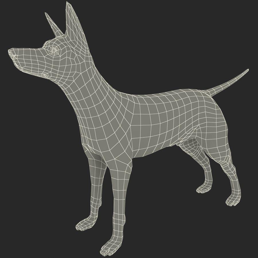 Meksikalı Tüysüz Köpek Xoloitzcuintli royalty-free 3d model - Preview no. 10