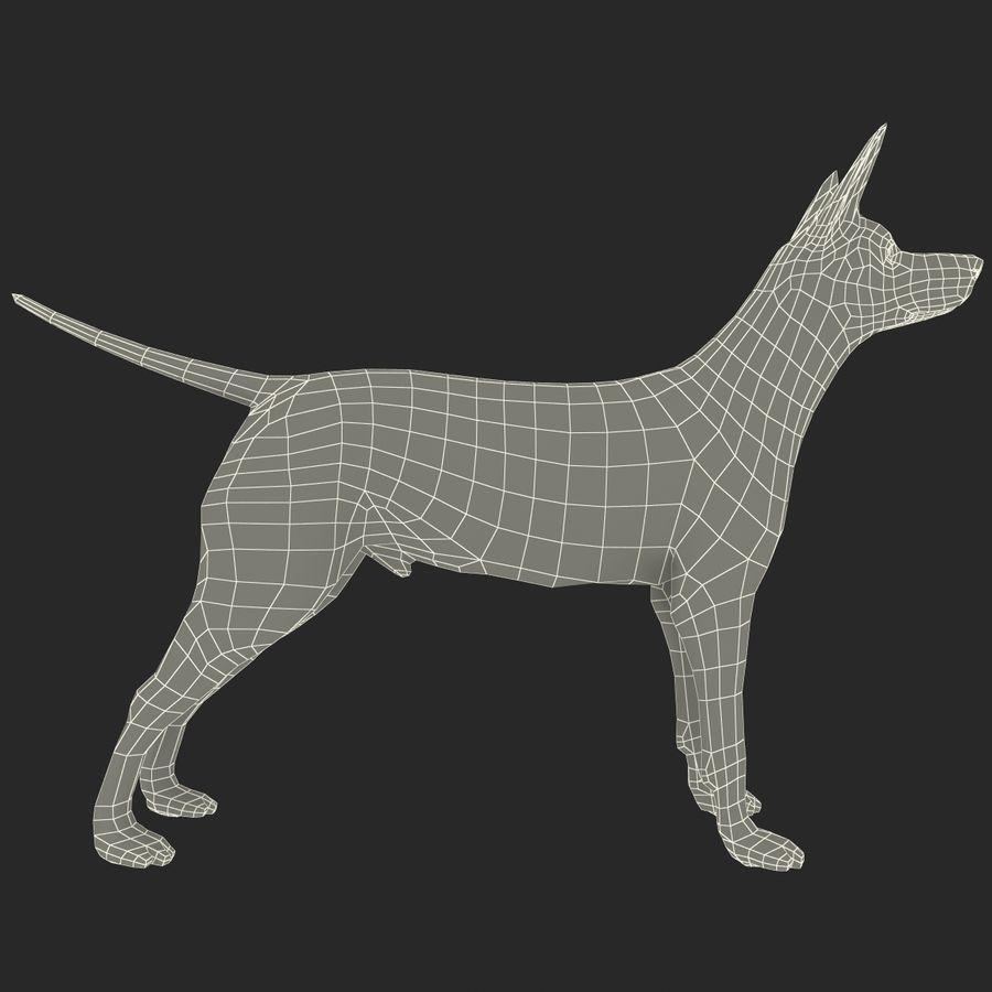 Meksikalı Tüysüz Köpek Xoloitzcuintli royalty-free 3d model - Preview no. 12
