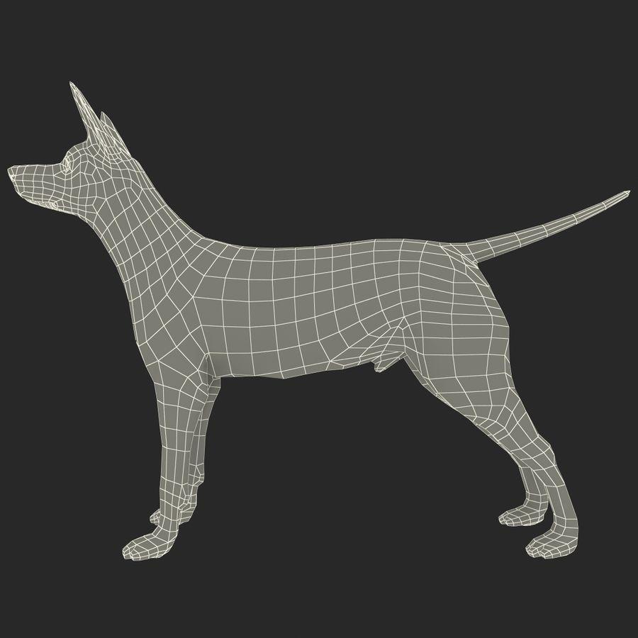 Meksikalı Tüysüz Köpek Xoloitzcuintli royalty-free 3d model - Preview no. 11