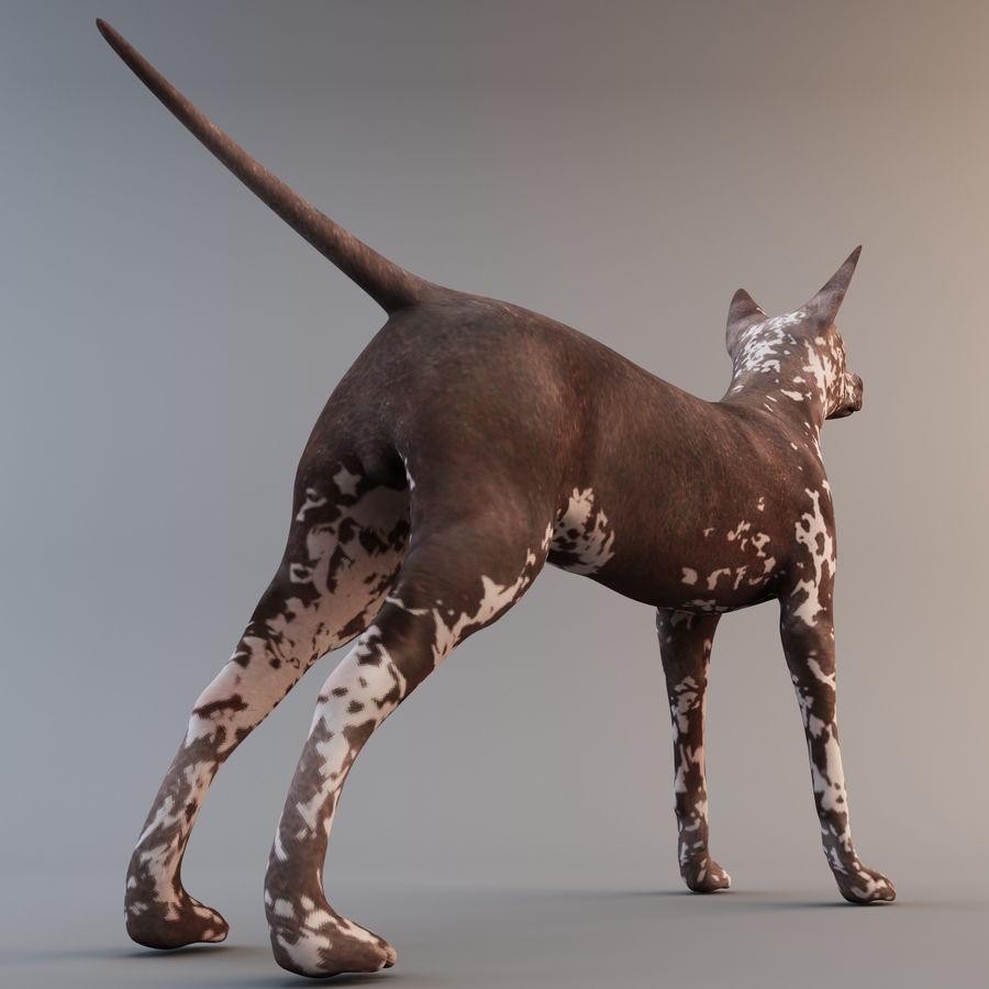 Meksikalı Tüysüz Köpek Xoloitzcuintli royalty-free 3d model - Preview no. 7
