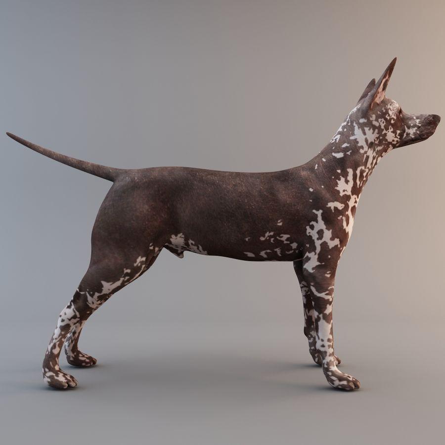 Meksikalı Tüysüz Köpek Xoloitzcuintli royalty-free 3d model - Preview no. 5