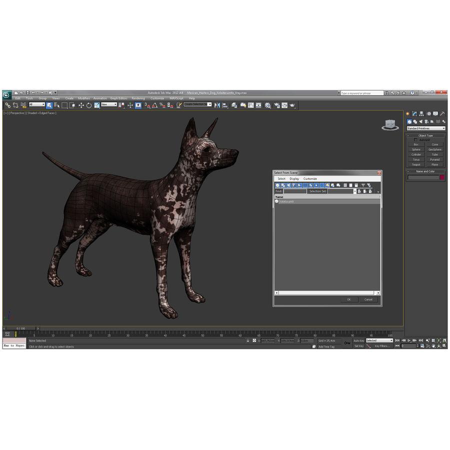 Meksikalı Tüysüz Köpek Xoloitzcuintli royalty-free 3d model - Preview no. 9