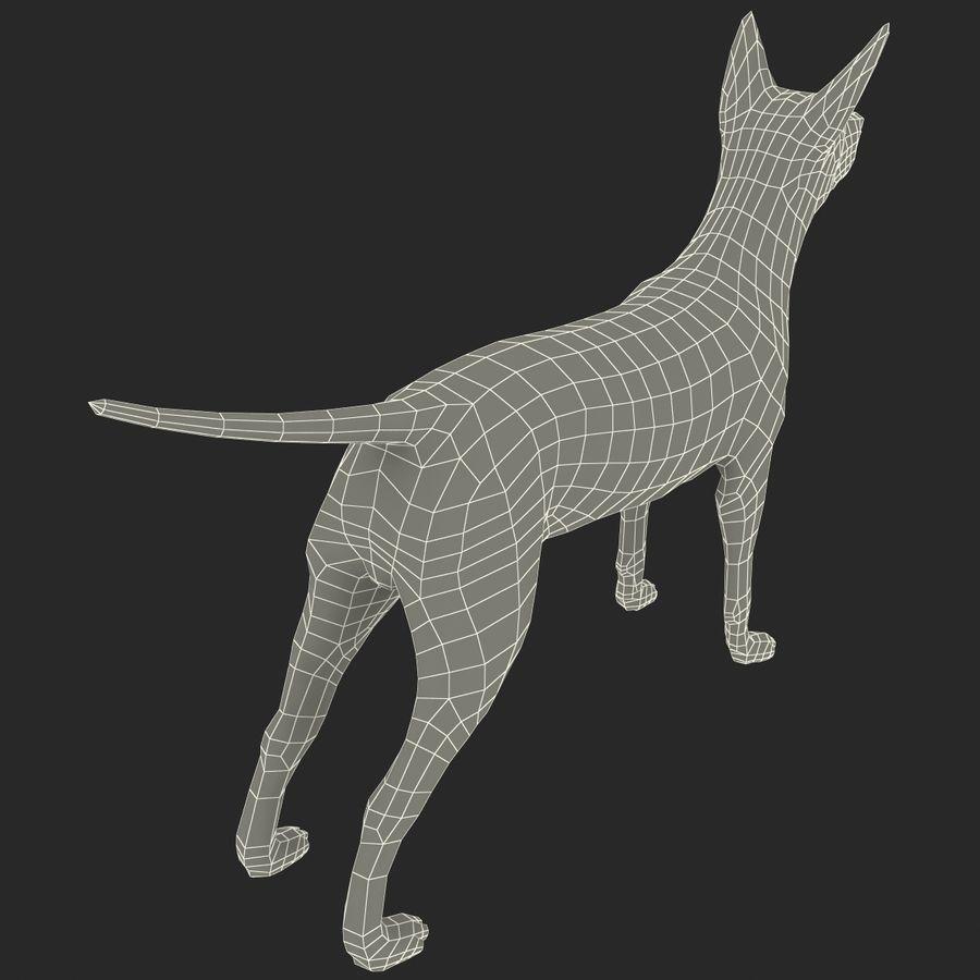 Meksikalı Tüysüz Köpek Xoloitzcuintli royalty-free 3d model - Preview no. 13