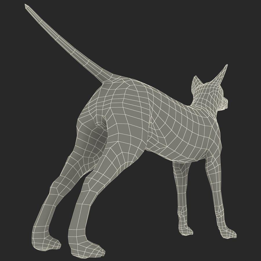Meksikalı Tüysüz Köpek Xoloitzcuintli royalty-free 3d model - Preview no. 14