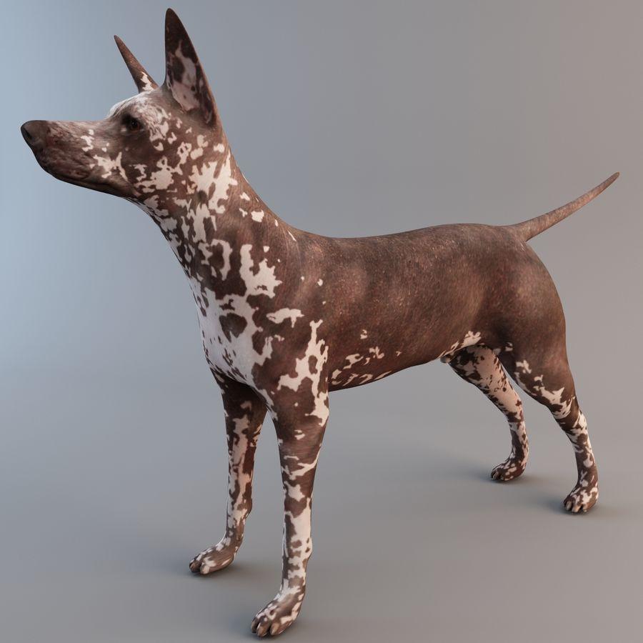 Meksikalı Tüysüz Köpek Xoloitzcuintli royalty-free 3d model - Preview no. 2