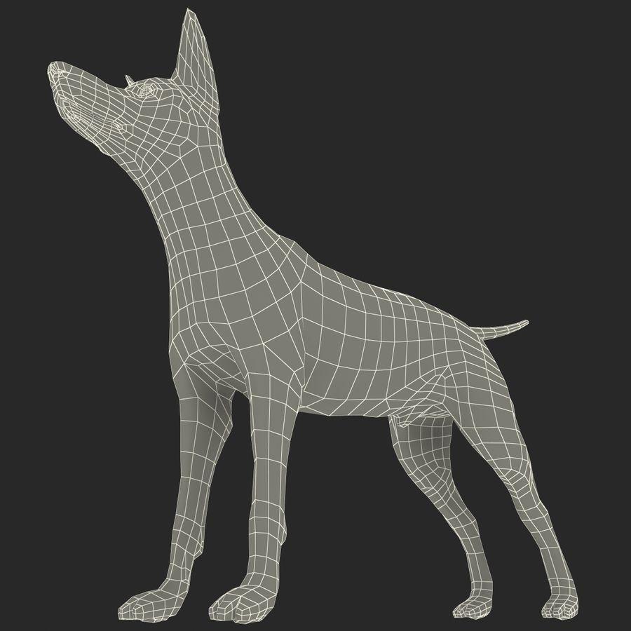 Meksikalı Tüysüz Köpek Xoloitzcuintli royalty-free 3d model - Preview no. 15